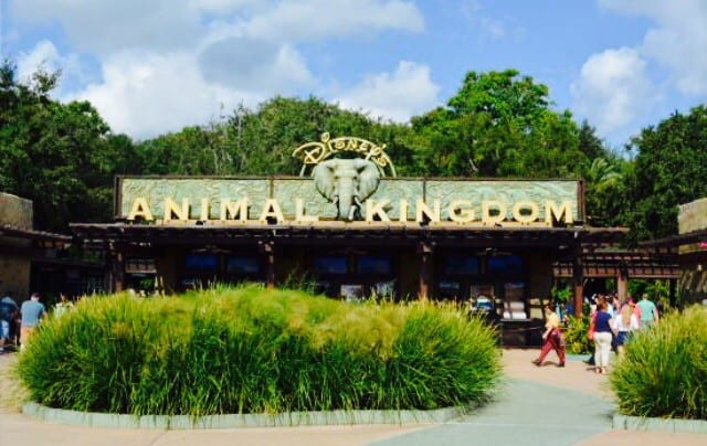 Wild Africa Trek at Disney's Animal Kingdom Behind the Scenes