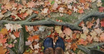 Our Favorite Fall Things To Do