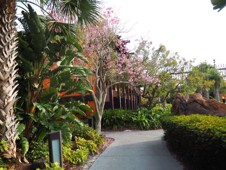 grand floridian to the polynesian walking path walt disney world