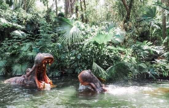 Best Jungle Cruise Jokes