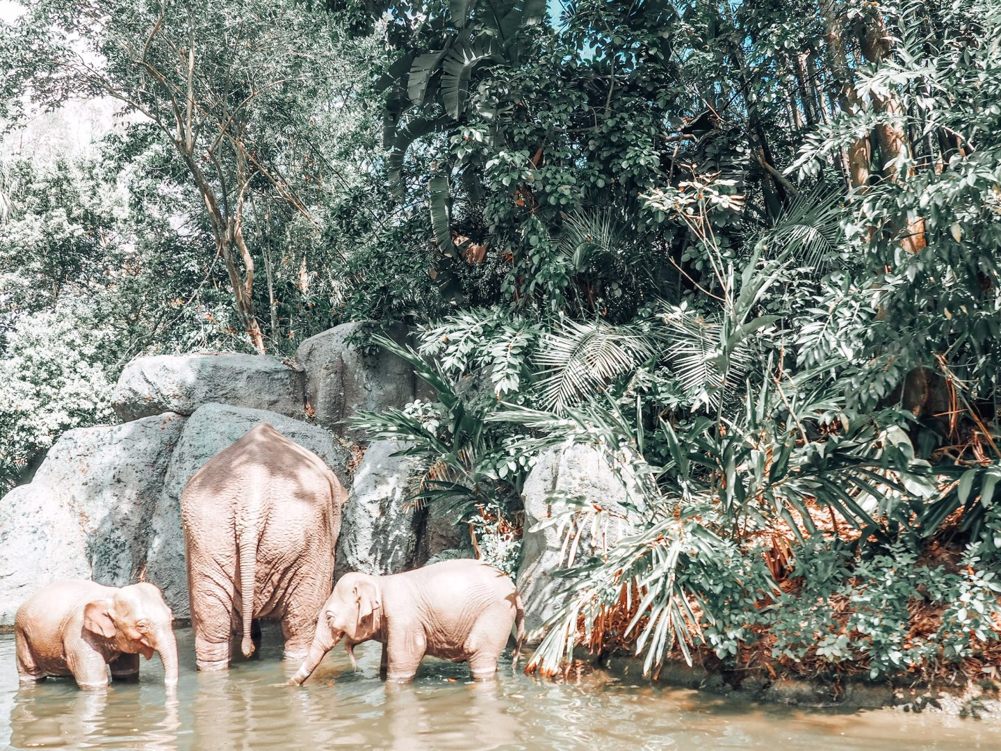 elephants in jungle cruise