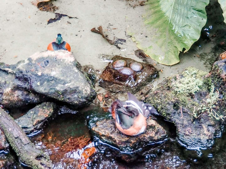 Hidden Mikcey in Animal Kingdom Gorilla Falls Trail